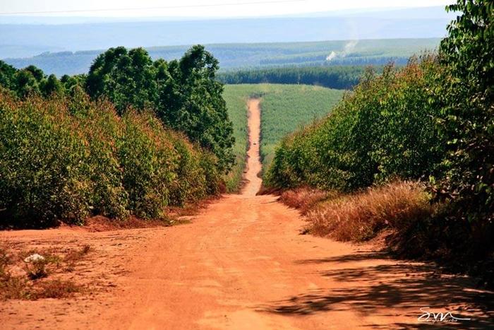 estrada-para-distrito-de-santo-antonio-do-fanado-predominancia-do-eucalipto-foto-sergio-mourao